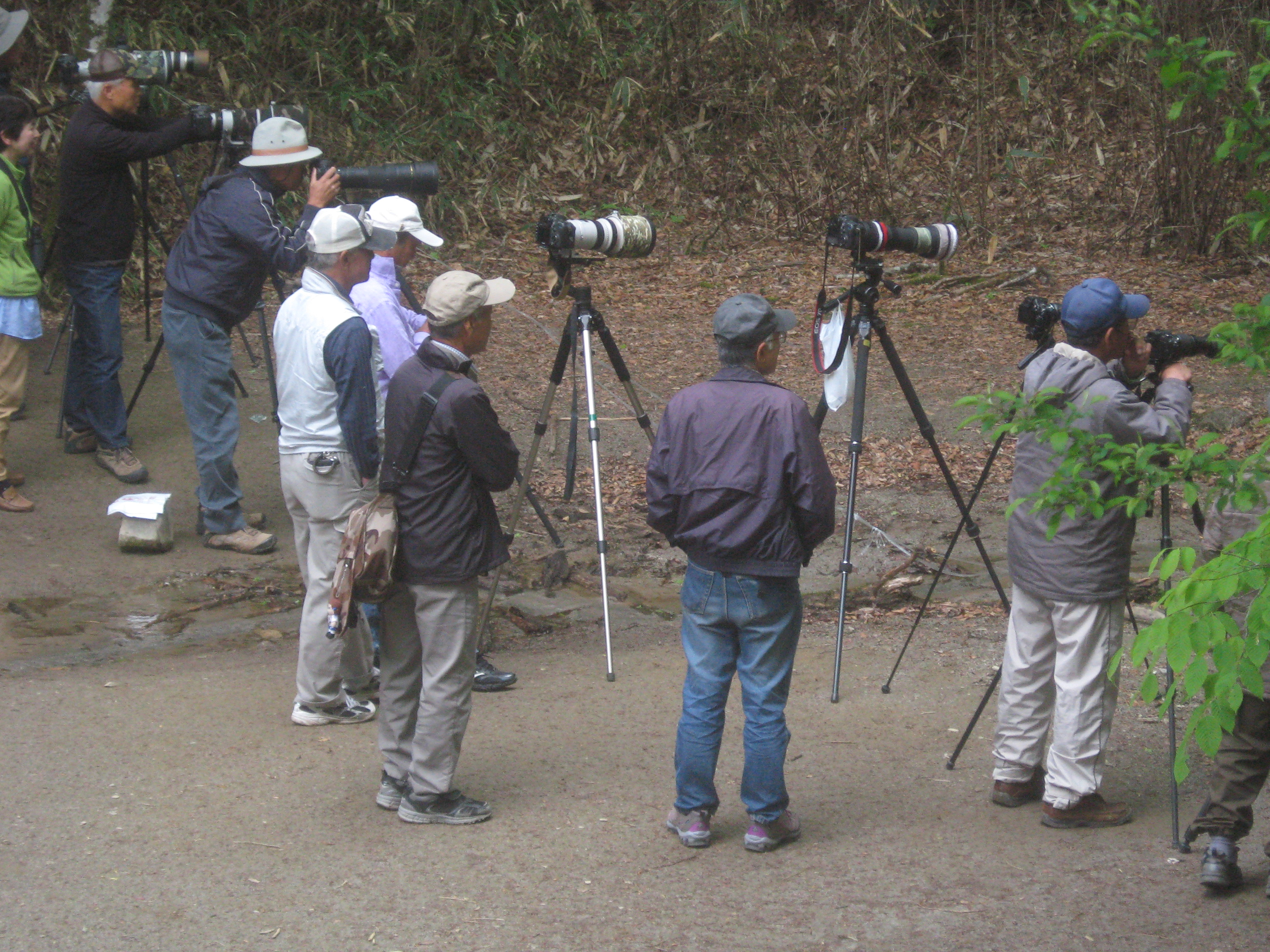 yamanashi prefecture nature guides chatting during quiet times clicking hundreds of frames when a colourful blue white flycatcher or a narcissus flycatcher comes in range