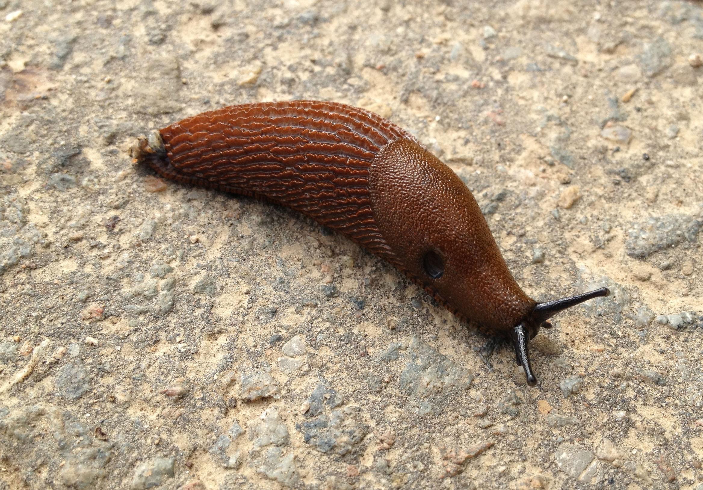 slugs snails and astonishing tales wild watch japan